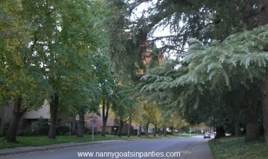 sacramento, sacramento city of trees, sacramento trees per capita, trees sacramento
