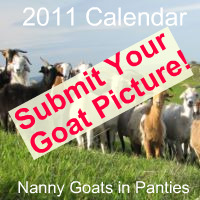 Get your goat in the 2011 calendar!