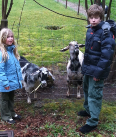 wa kids with neighbor goats