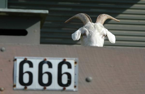 killer goat