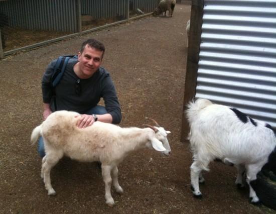 goat, goat picture, goat in australia