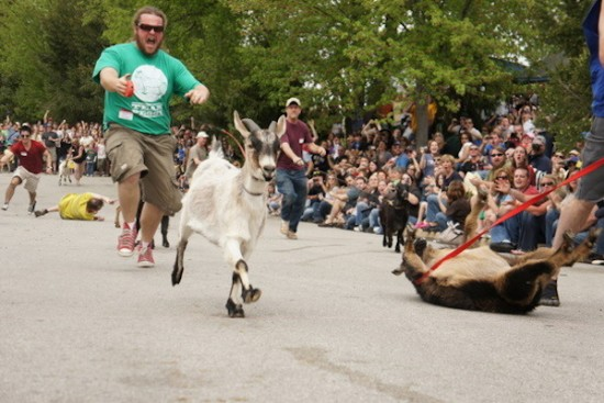 running of the goats, goat race, bock fest goat races