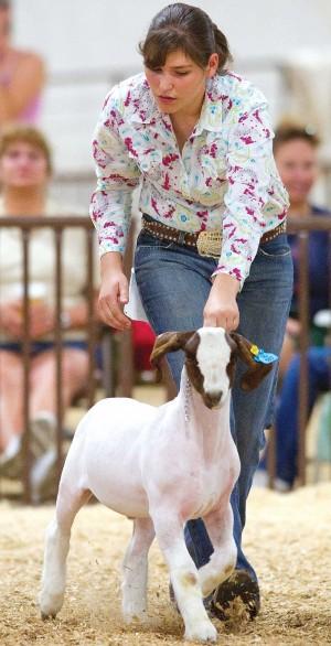 colorado state fair, goat doping