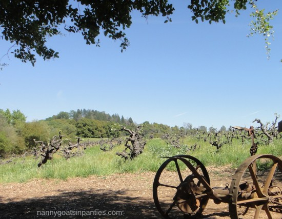 story winery, vineyard, amador county