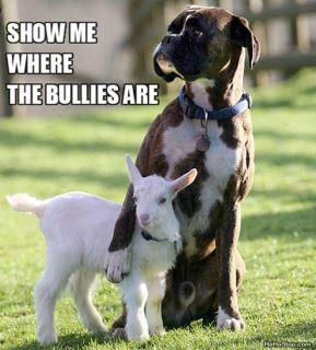 goat dog bullies