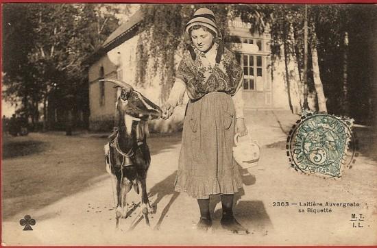 goat picture, goat postcard, laitiere auvergnate sa biquette