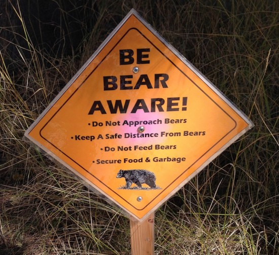 bear sign, taylor creek